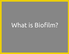 What is Biofilm