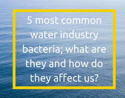 5 most common water industry bacteria; what are they and how do they affect us?