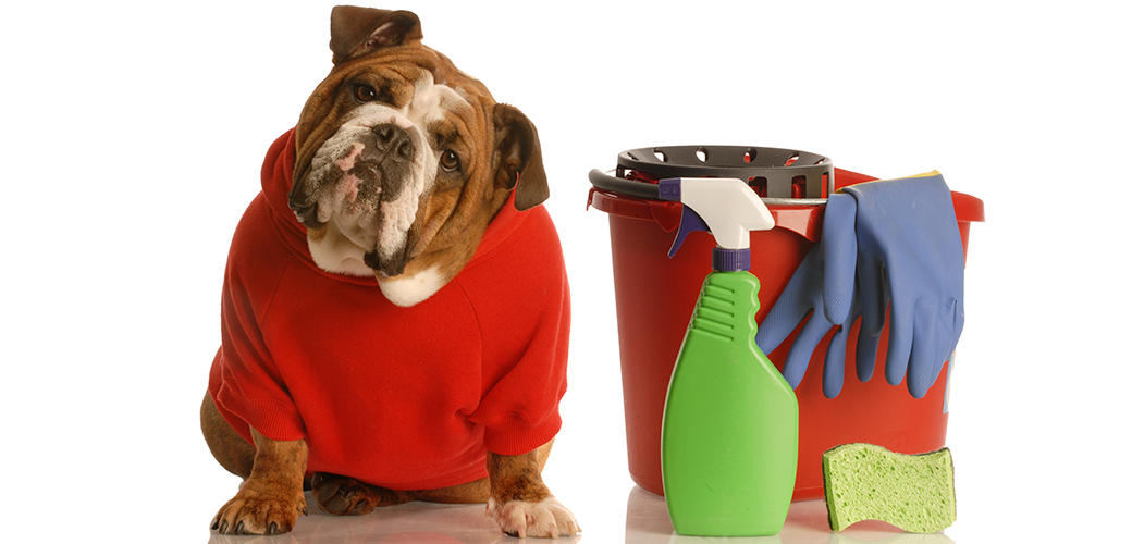Dog_sitting_beside_bucket_and_cleaning_products