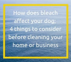 How does bleach affect your dog; 4 things to consider before cleaning your home or business
