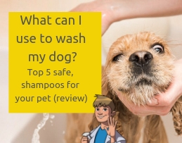 What can I use to wash my dog