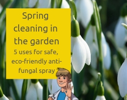 Spring cleaning in the garden_ 5 uses for safe, eco-friendly anti-fungal spray