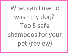 What can I use to wash my dog? Top 5 safe shampoos for your pet (review)