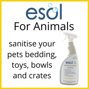 ESOL for Pets
